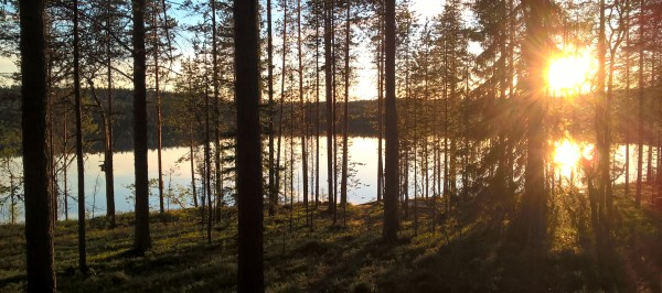 Midnight sun forest